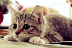 Психологи про животных. Психолог онлайн